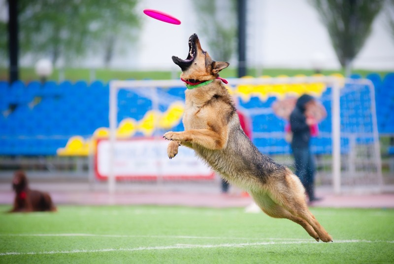 Active Dog Breeds For Your Active Life!