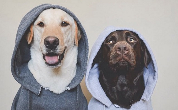 These Dogs Are Absolutely Cooler Than Their Owners