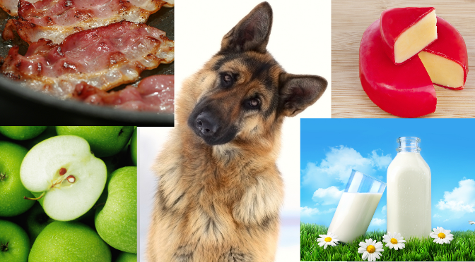 10 People Foods That Can KILL Your German Shepherd