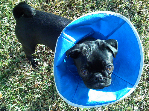 Prevent Your Dog From Licking Their Wounds With These Tips