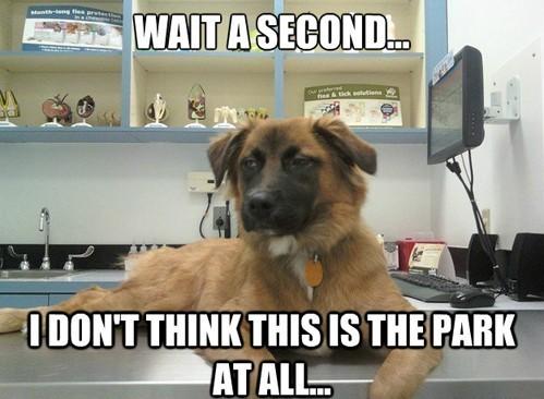 dog sitting on a desk meme