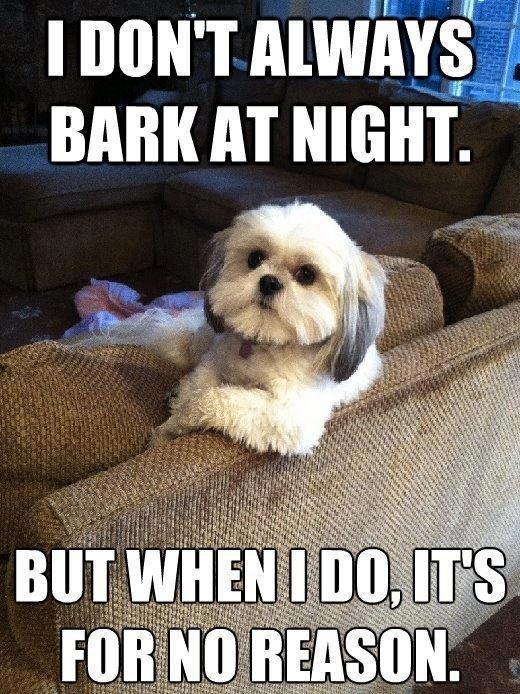 dog sitting on sofa meme
