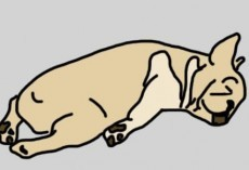 How Much a Dog's Sleeping Position Tells Us About Him is Extraordinary