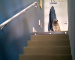 (Video) Lonely Pug Calls Out. What Happens Next is Something We Didn't Expect.