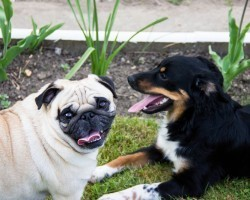 Dog Trancing – What it is and Whether it's Something to be Concerned About