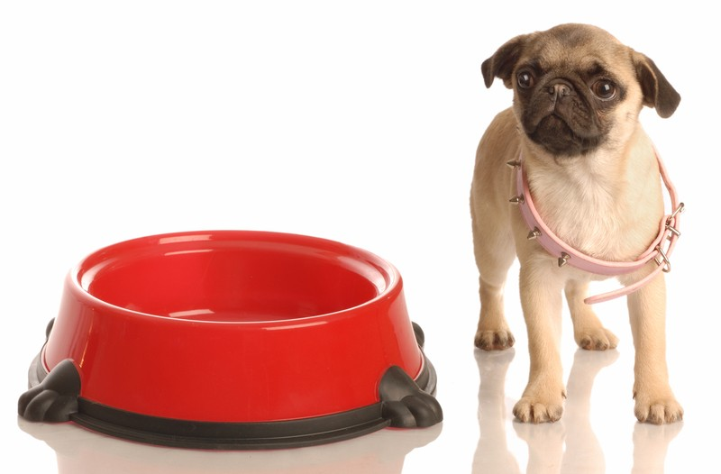 Can Puppy Food Make Dogs Nuts