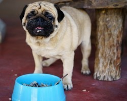 Two Proteins to Never Feed a Dog Because it Can Result in a Dog Having Serious GI Upset