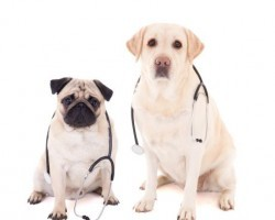 Surprising Diseases Owners Can Catch From Their Pooch