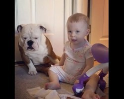 (VIDEO) This Baby and Bulldog Are Up to No Good. Why This is the Case? Pure Comedy!