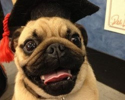 7 Doggies Who Are Graduating and Are Ready to Get the Party Started