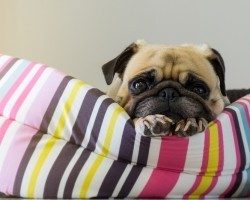 4 Scary Things That May be Found in a Doggie's Bed
