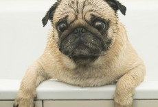 7 Common Doggie Bath Time Mistakes That Should be Avoided