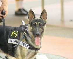 Amazing Working Dogs to Appreciate on Labor Day and Beyond