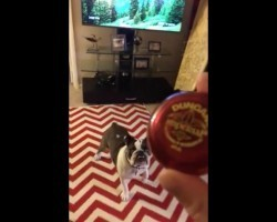 (Video) Bulldog Isn't so Sure About a Yo-Yo. When the Owner Begins Playing With It? Talk About Humorous!