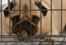 A Dog Owner Shouldn't Leave a Dog at a Boarding Facility Until They Read THIS