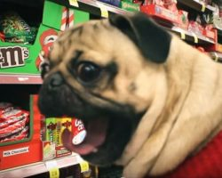 "(Video) This Pug Parody of ""All I Want for Christmas…"" is Food Has Me Laughing Non-Stop!"