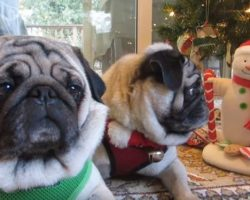 (Video) This Pug Knows How to Celebrate the Holidays… by Attacking Singing Snowmen! LOL!