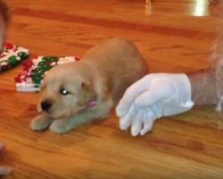 (Video) This Getting a Puppy for Christmas Compilation Will Put Everyone in the Holiday Spirit and Then Want Another Doggie! LOL!