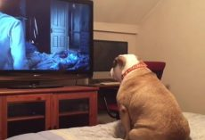 (Video) Protective Pooch Does Her Best to Protect Family From Scary Movie