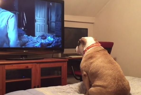 Dog Watches Scary Movie