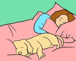 4 Surprising (Yet Wonderful) Reasons a Dog Should Sleep by His Human's Side Every Night