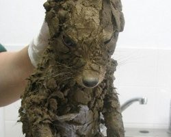 "Workers Find What Appears to be a ""Muddy Puppy"" Trapped in Hole, But Their Jaws Drop Open After He's Cleaned Off!"