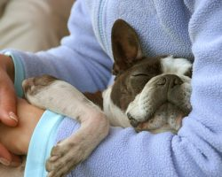 How to Protect a Pooch During Rabies Season