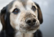 7 Tell All Signs an Owner is Unintentionally Breaking Their Dog's Heart