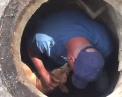 (Video) Kind Rescuer Takes Moment to Comfort Terrified Dog Stuck in Sewer Before Helping Him to Safety