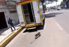 (Video) In One Terrifying Moment, Dog Gets Free From Owner and Runs Down Busy Street in Mexico City