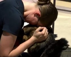 (Video) After Serving for 6 Years, Military Dog Finally Reunites With Handler – For Good