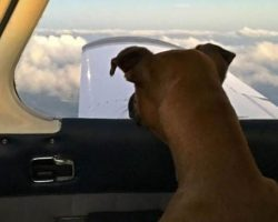 Kind Hearted Veteran Purchases a Plane to Transport Shelter Dogs to Their New Homes