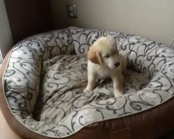(Video) Puppy and Kitten Are Over the Moon Excited Over Their New Bed
