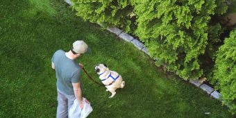 Why a Dog Takes so Long to Decide Where to Go Poop